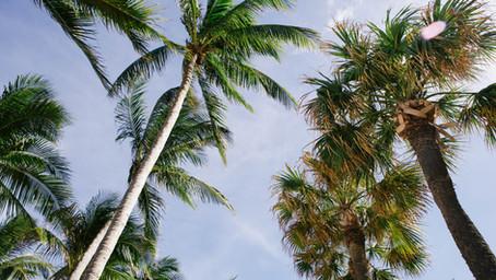 Palm oil production - raising awareness