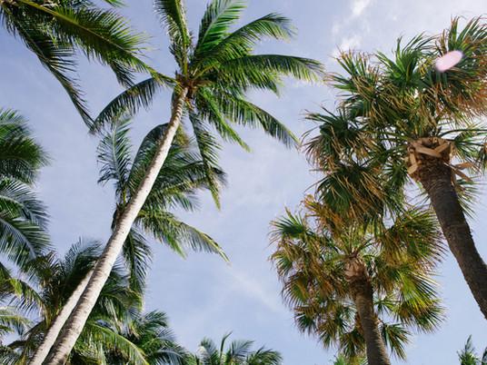 Rare Palms