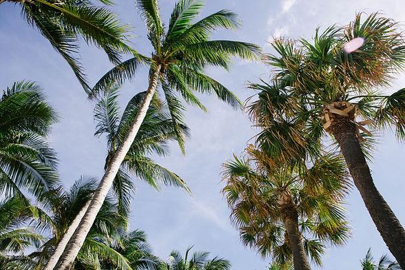 Sarasota Tree Services