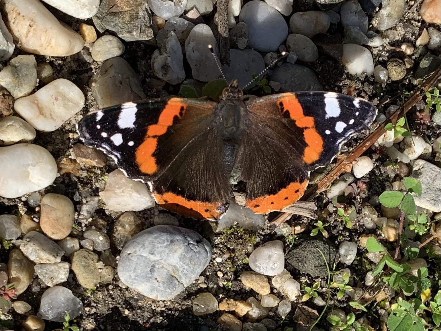 Papillon au Château Larrivaux