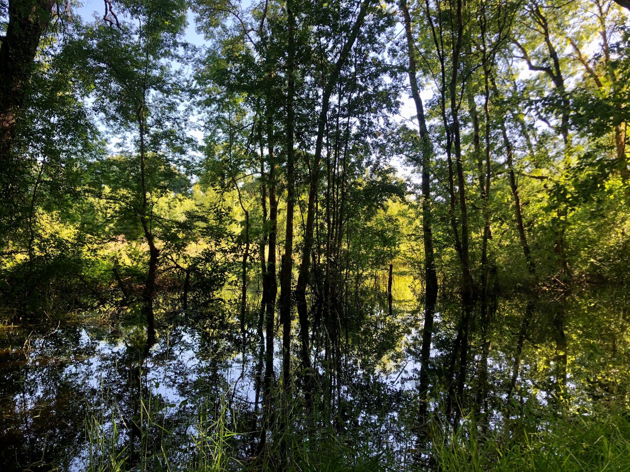 Biodiversité à Larrivaux
