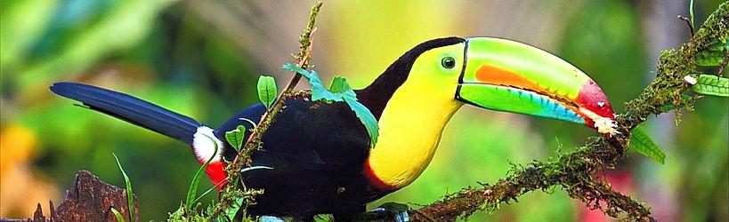 Voyage en famille Costa Rica