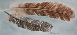 Tying Feather Study