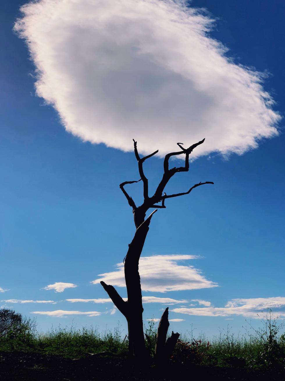 hat tree