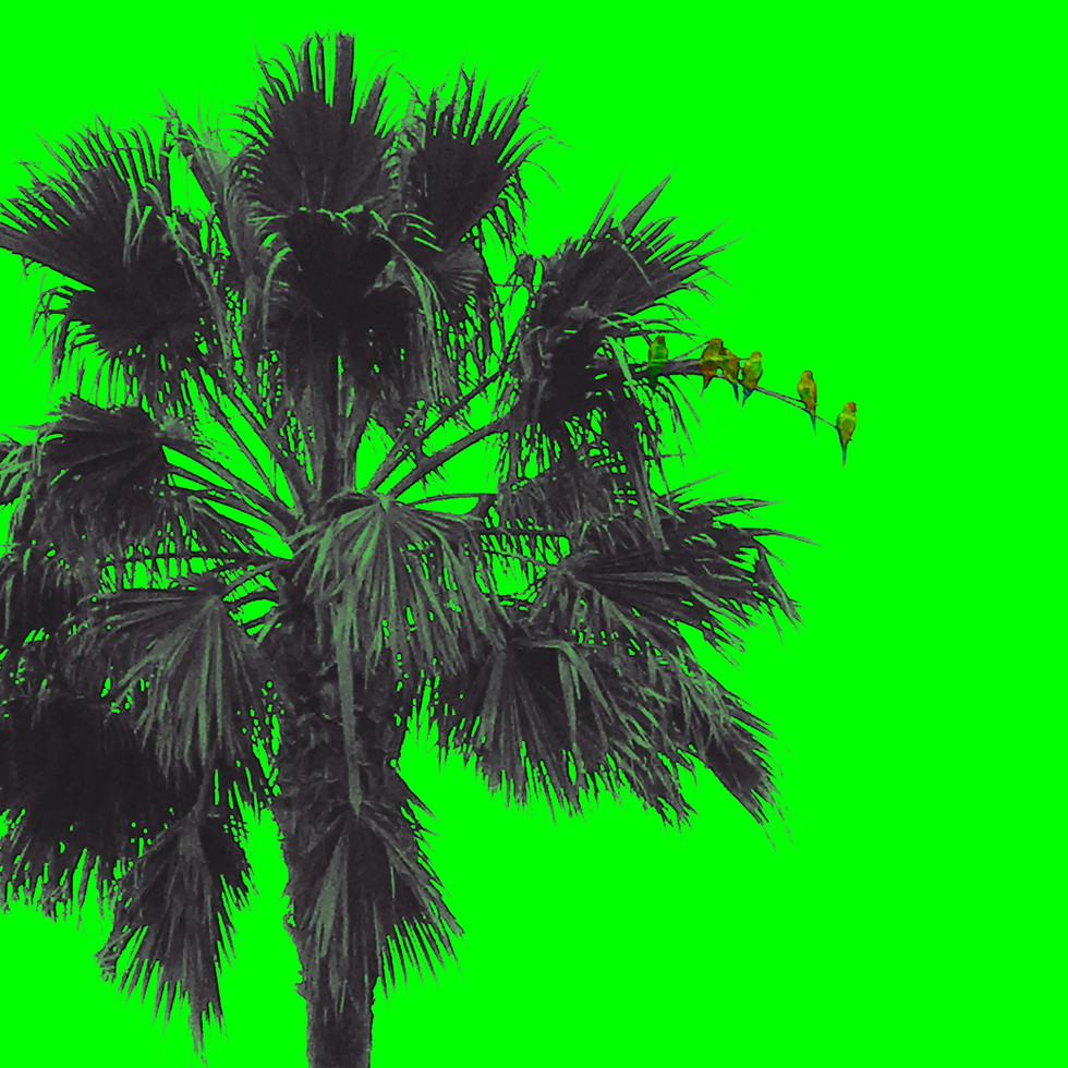 wild parrots of malibu, neon green