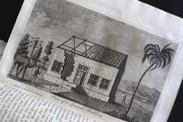 Des dromadaires en Jamaïque