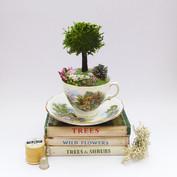 Oak tree in tea cup
