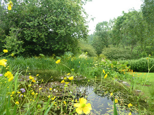 My pond in June
