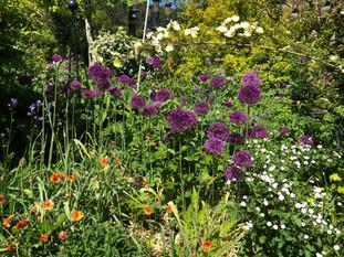 May in my garden