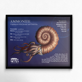 Ammonite Sign