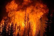 Wildfire Management.jpeg