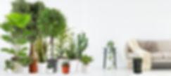 G-Bio plantas2.jpg