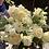 Thumbnail: Bridal Bouquets