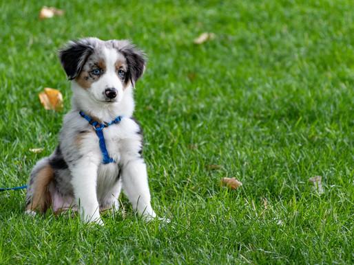 Waarom het een goed idee is om met je puppy naar de hondenschool te gaan