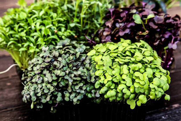 The Case for Microgreens