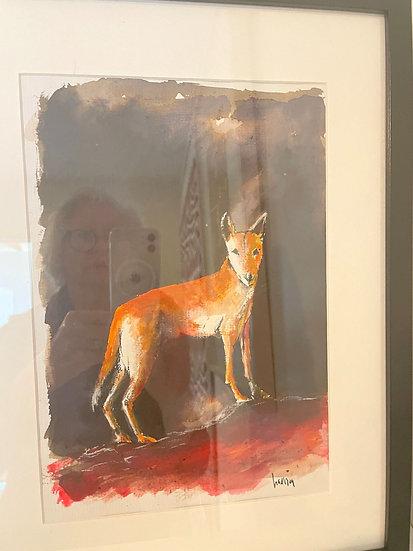 Stephen Harrison, Dingo