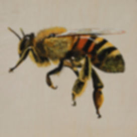 HoneyBee_2019_gouacheandgraphite_200x200