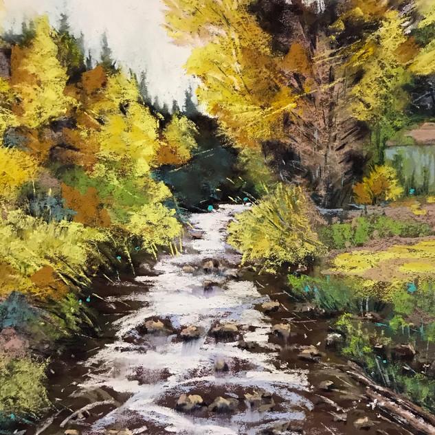 Caroline Reid Cotter River wattle