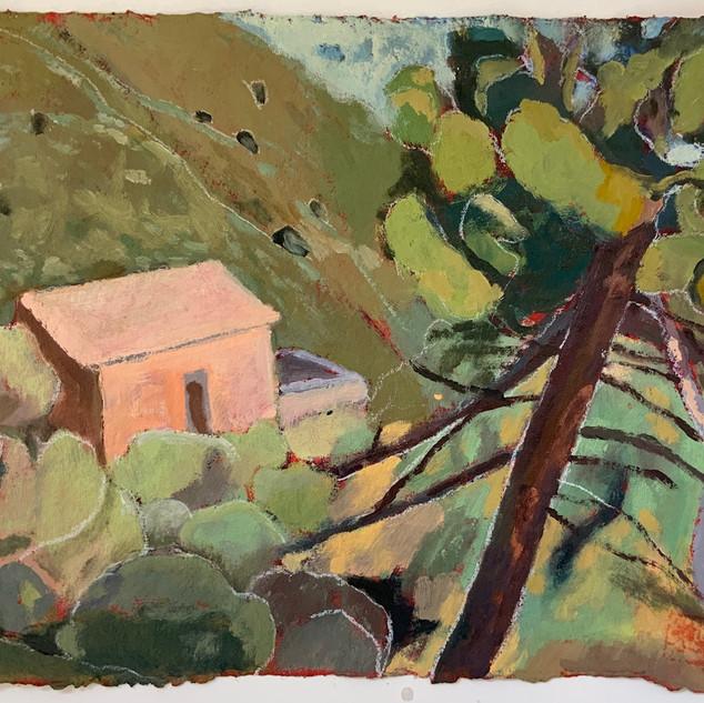 Robin Howard Cieto, pine tree, Italy, oil on paper