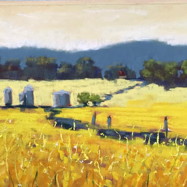 Caroline Reid field of gold