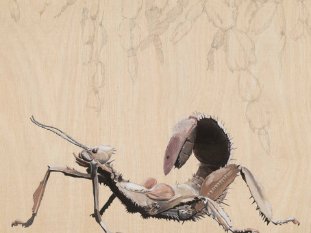 Blown away by support for Liz Faul's exhibition,  The Birds and the Bees.