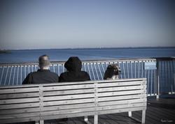 Coney Island's pier (2014)