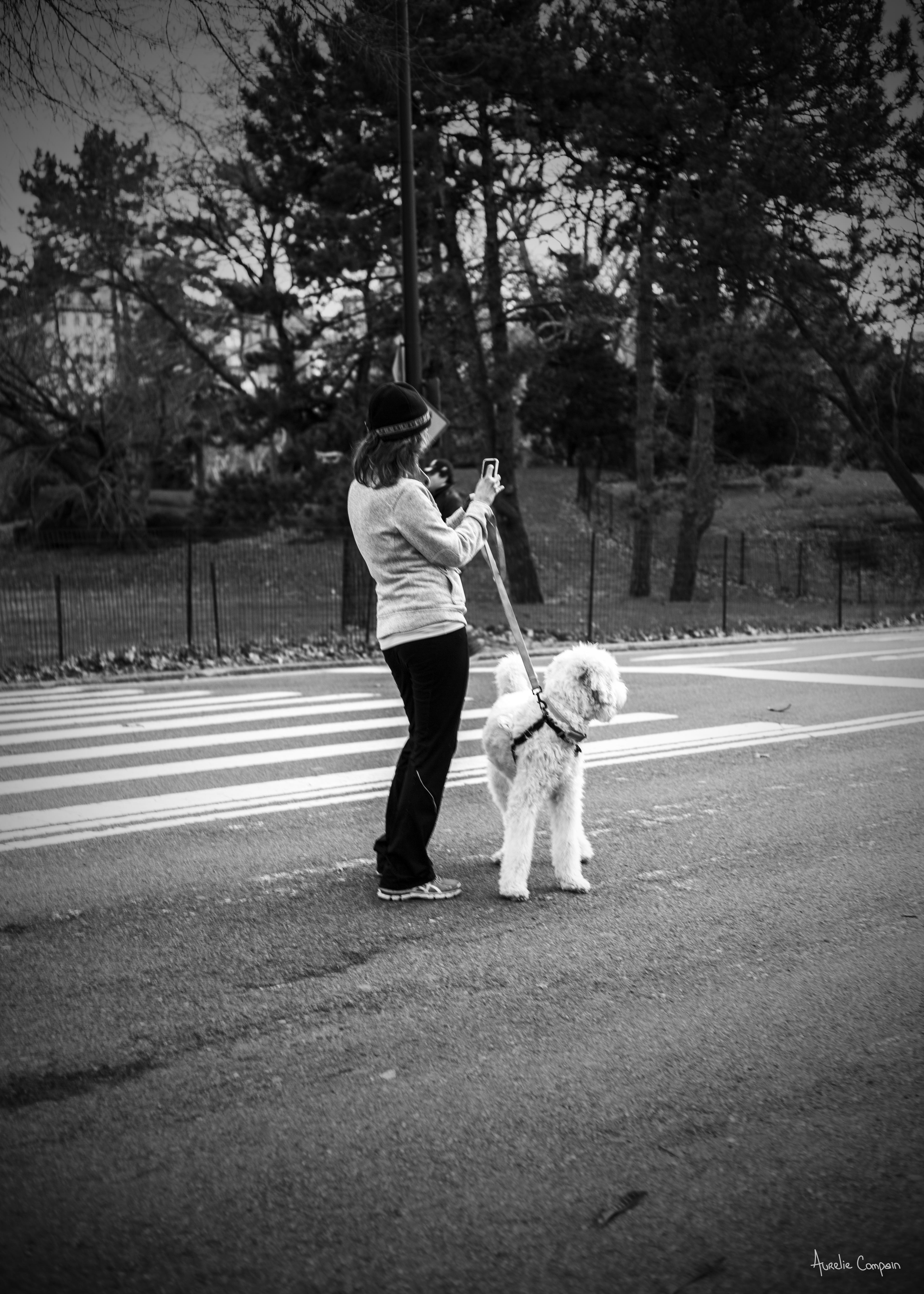 Central Park (2014)
