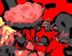 Rose2Ausschnitt_COLE19-6