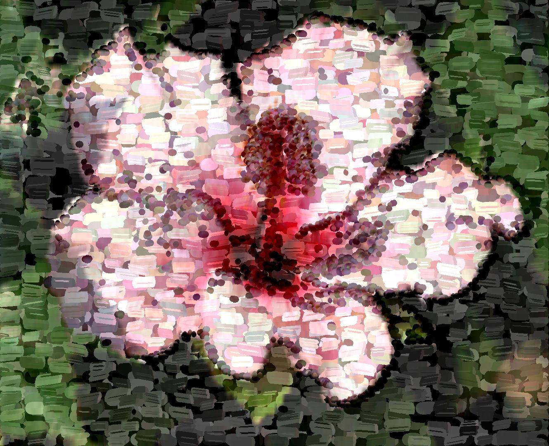 Blume1