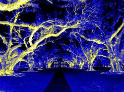 Oak Alley kalte Nacht