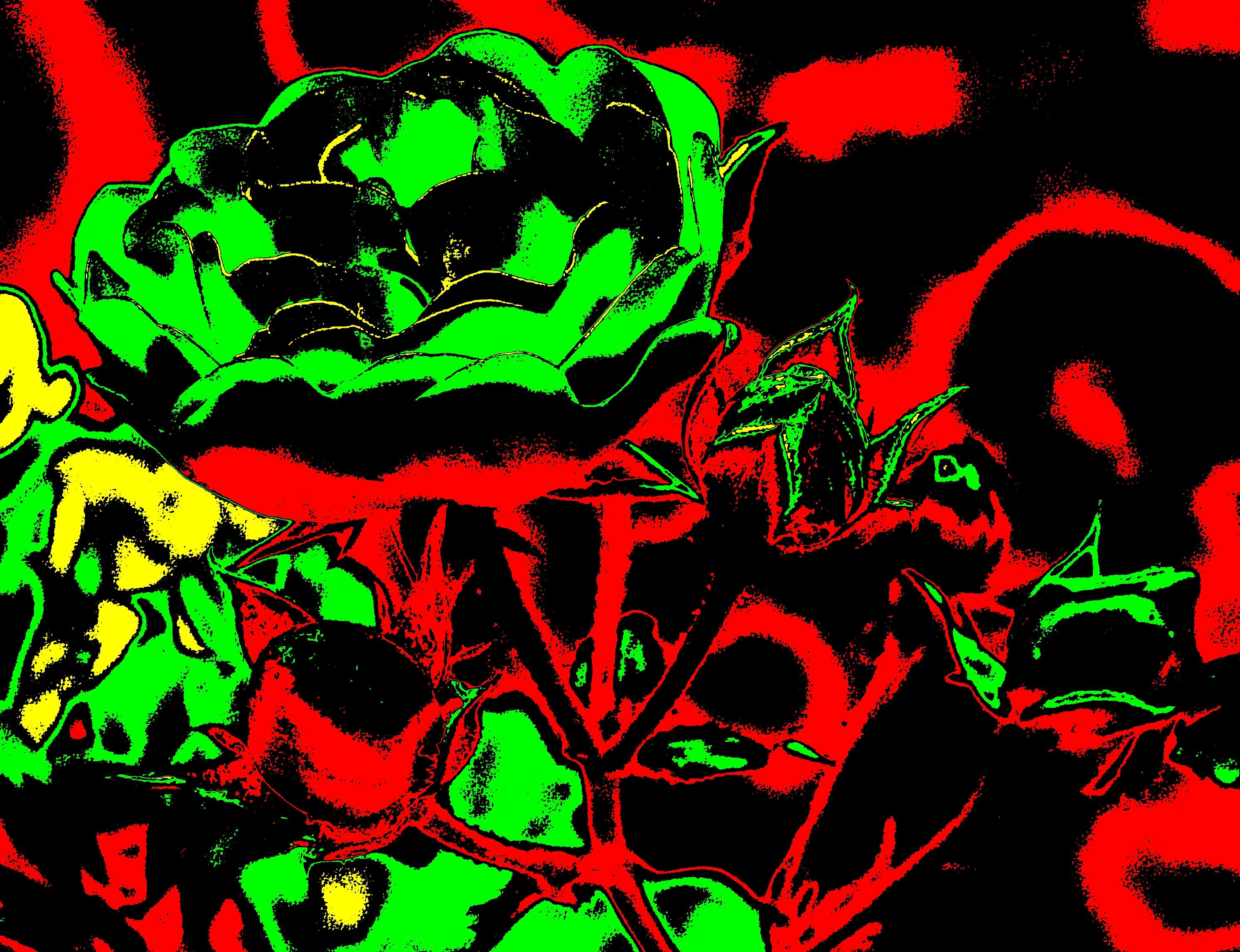 Rose2Ausschnitt_COLE8-5