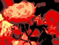 Rose2Ausschnitt_COL12-5
