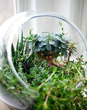 Декоративные суккулентные растения