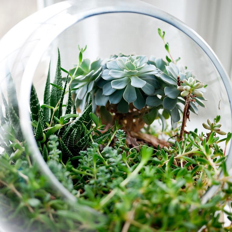 Succulent Plants Class