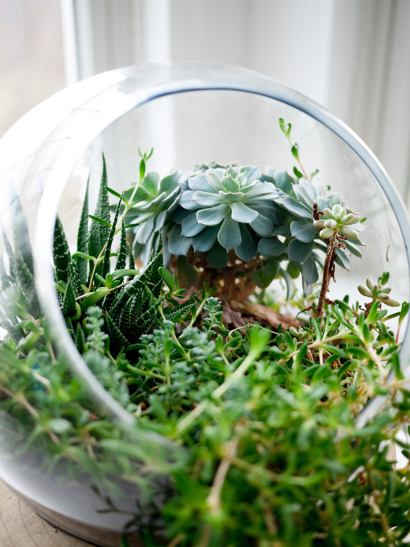 Plantes succulentes décoratives terrarium