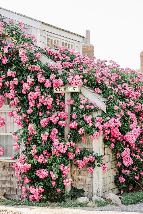 Pink Rose Covered Cottage 3