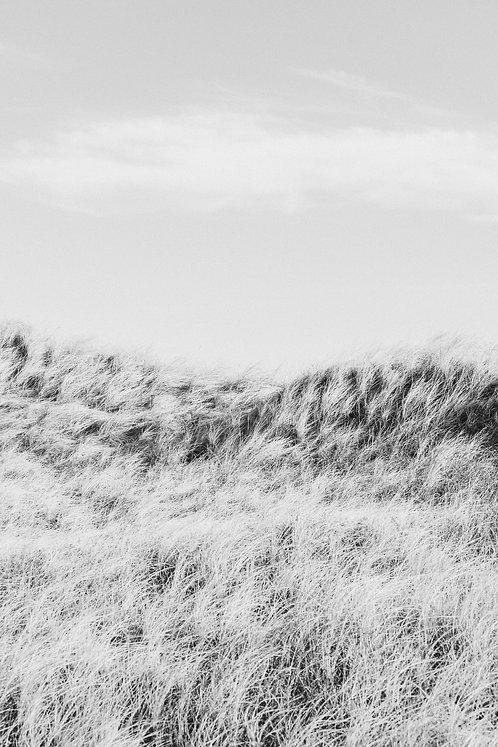 Windy Dunes 1