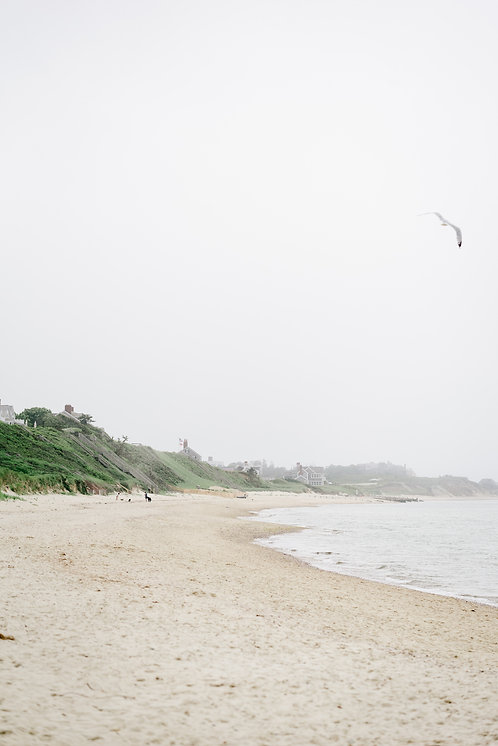 Seagull at Steps Beach