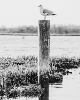 GULL AND PILON 2 BW.jpg