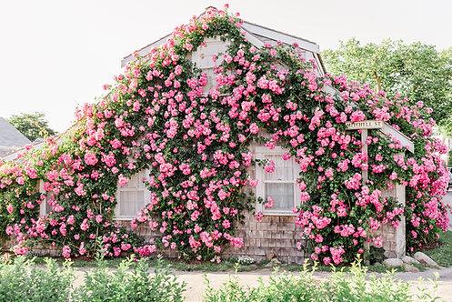 Pink Rose Covered Cottage 2