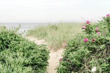 Codfish Park Beach Path