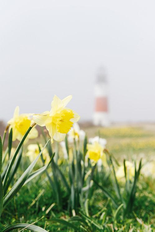 Daffodils & Fog at Sankaty Head Light 2