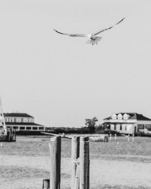 Nantucket Black and White Photography Framed Art