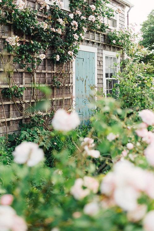 Sconset Blue Door & Roses