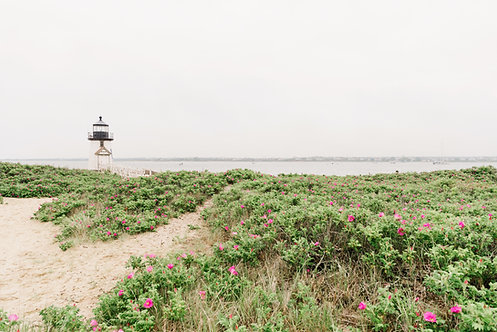 Dunes at Brant Point in Spring