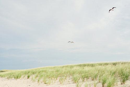 Seagulls at Coskata