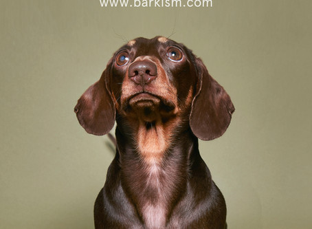 Our New Collaboration with Barkism