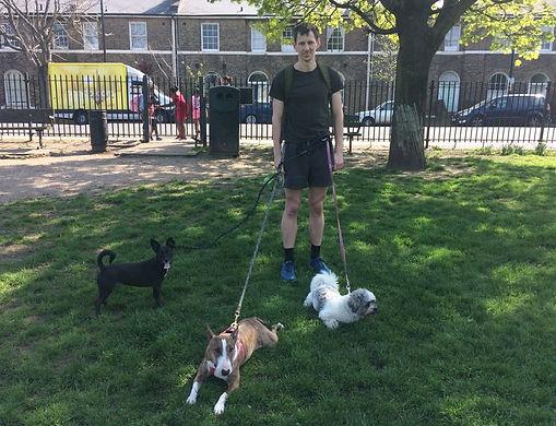 Islington Dog Walkers, Dog Walking in North London