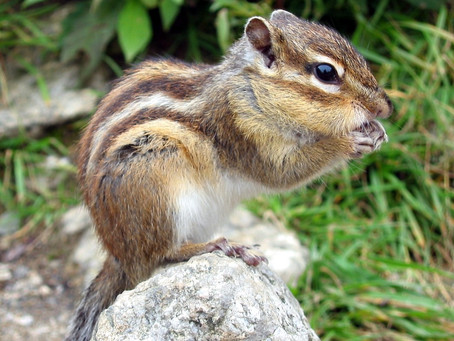 Darál a mókuskerék?