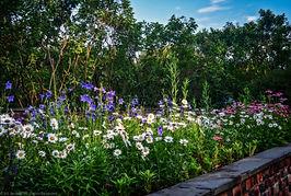 BBPool Garden Platycodon grandiflorus.jp